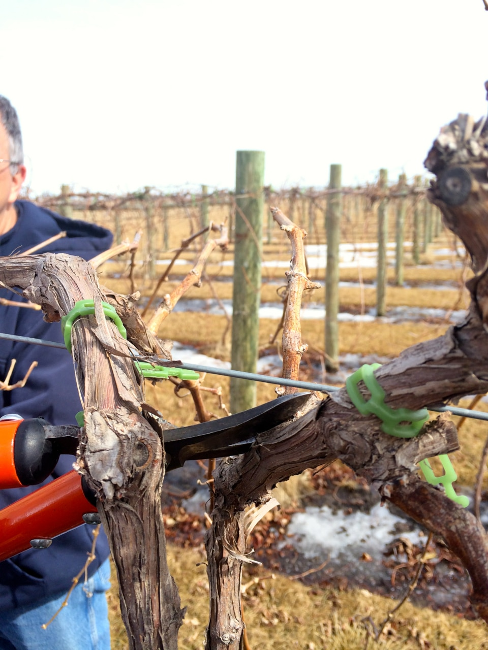 From the Viticulturist: Cutting Back on our Spring Work