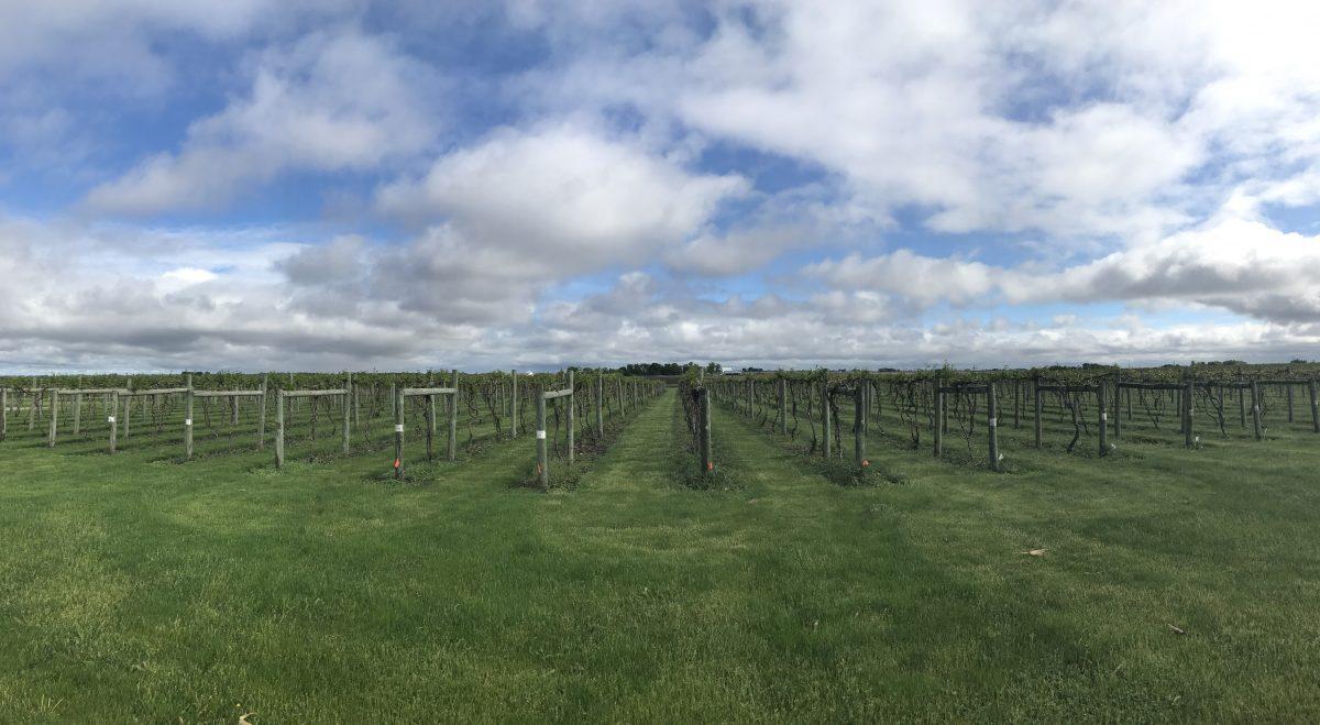 Update: Vineyard & Winery