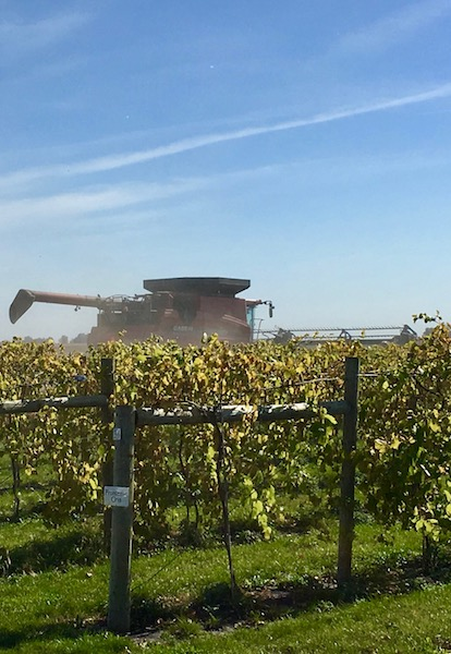 Iowa wineries among corn and soybeans